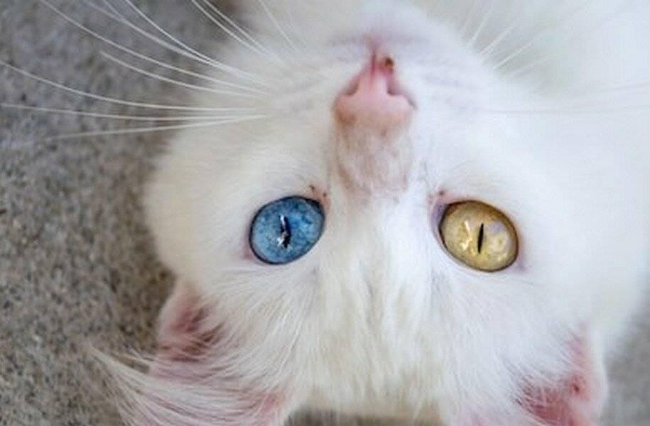 Когда котята открывают глаза: индивидуальные особенности и внешние факторы, влияющие на сроки, возможные патологии и отклонения