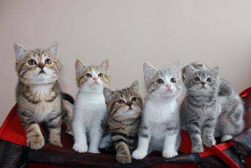 Какие прививки делать котенку и когда делать первые прививки?