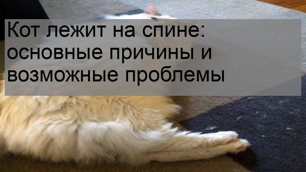Кот катается на спине