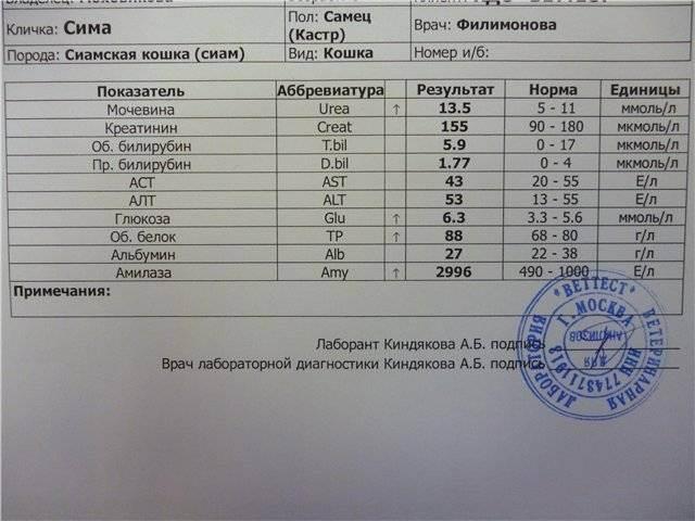 Общий и биохимический анализы крови у кошек: расшифровка, показатели при норме и при болезни, процедура сдачи крови
