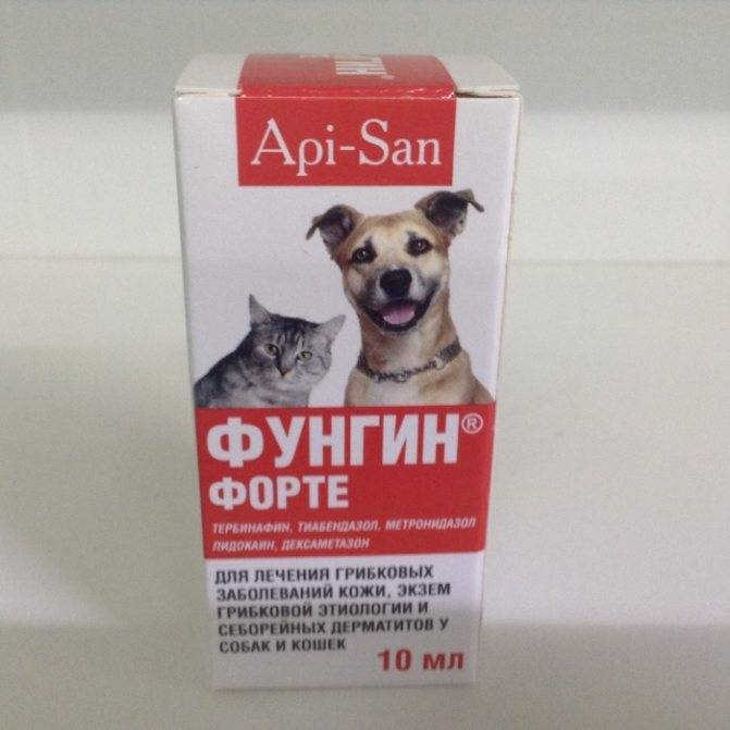 Фунгин для кошек — назначение, способ применения, дозировка