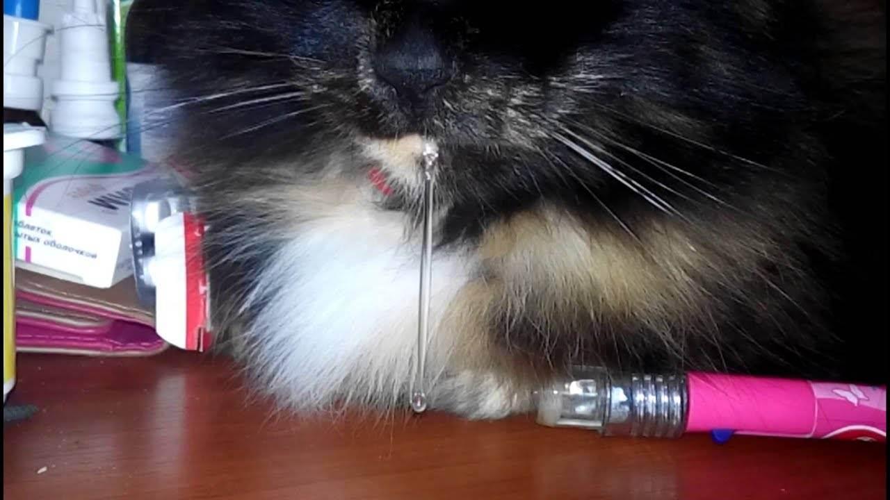 У кота вязкая слюна. обильное слюноотделение у кота (кошки) — причины и лечение