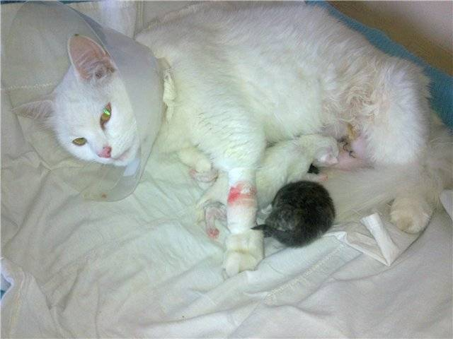 ᐉ кошка кормит котят - ➡ motildazoo.ru