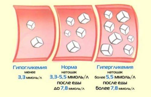 Норма сахара в крови у котов