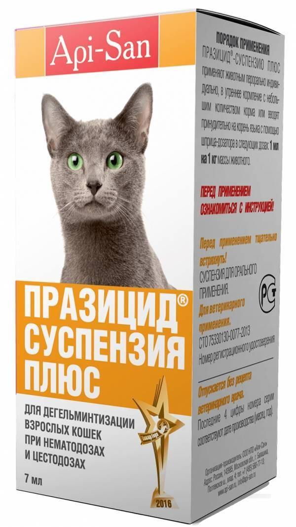 Средство от глистов для кошек: таблетки и суспензии
