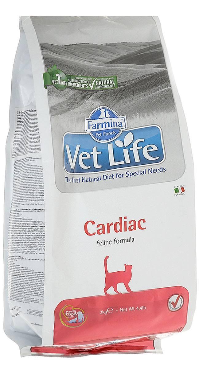 Что нельзя есть кошке при болезни почек? чем кормить кошку при почечной недостаточности: выбор правильного рациона.