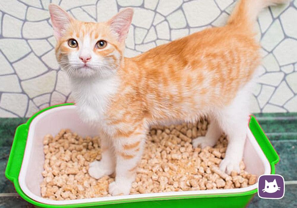 Как выбрать лоток и наполнитель для котенка
