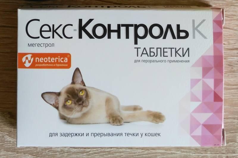 У кошки течка: нужен ли специальный укол?