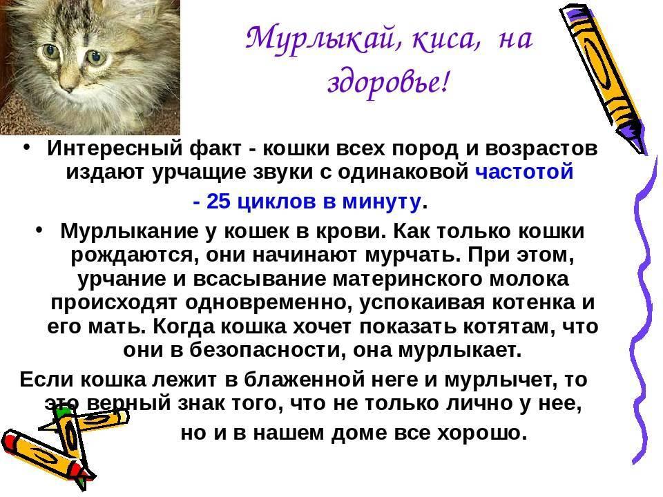 Почему кошки мурлыкают, чем и как коты мурчат