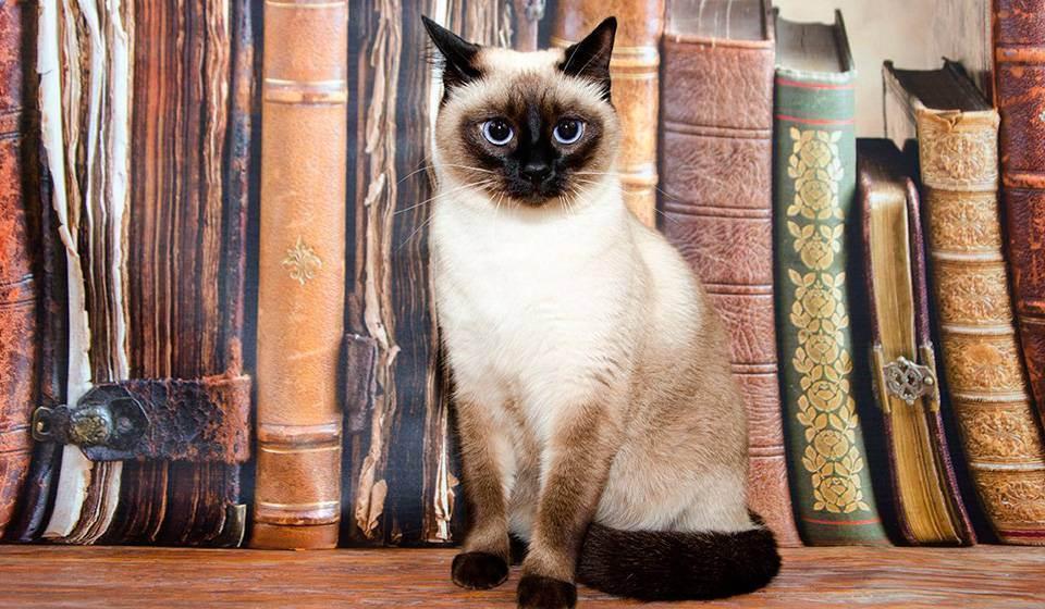 Окрасы кошек: генетика и классификация