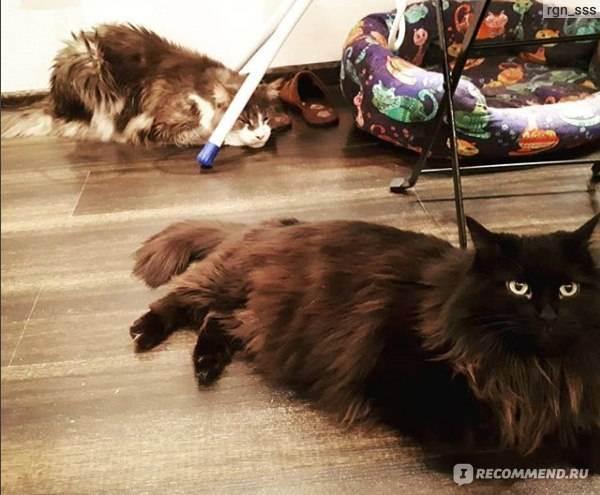 Фурминаторы для кошек: описание, виды, выбор и применение