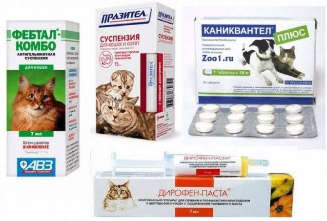 Как вывести глистов у кошки в домашних условиях: лечение питомца препаратами и народными средствами
