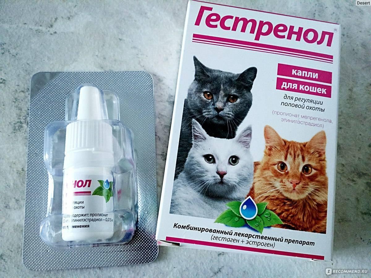 Противовоспалительные препараты для кошек: излагаем развернуто