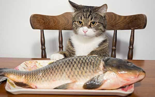 Кошка нюхает нос человека. почему кошки любят запах пота