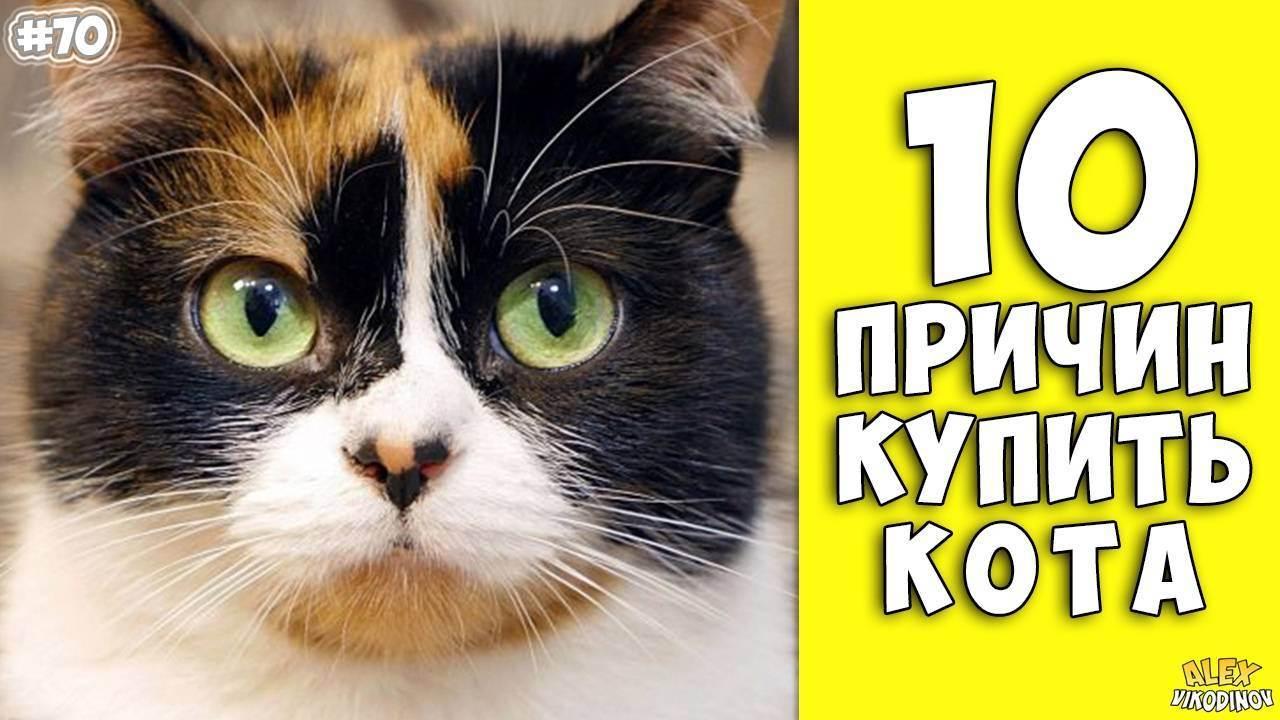 Дети: 10 причин завести кошку - odnako.su