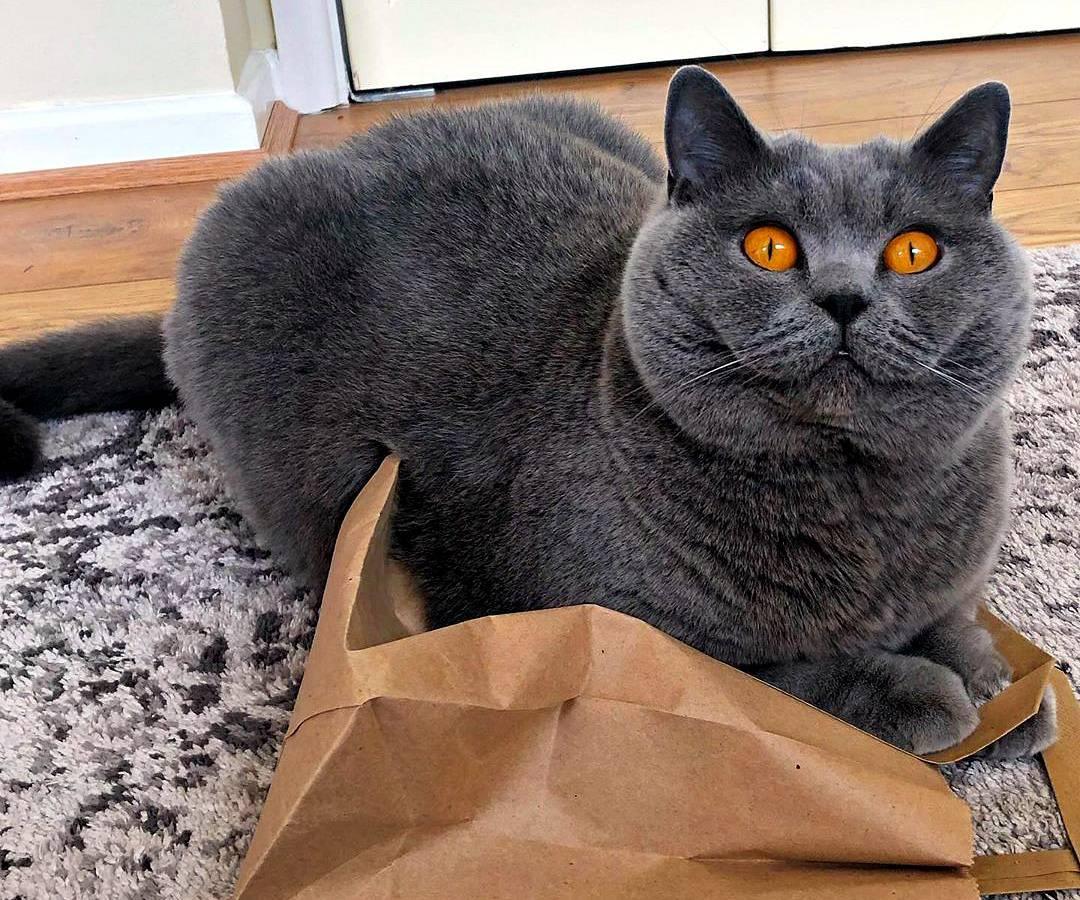 Как назвать трёхцветную кошку или кота: разные варианты выбора имён