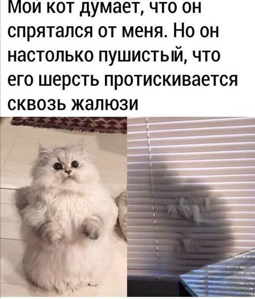 Кот кричит по ночам: что делать