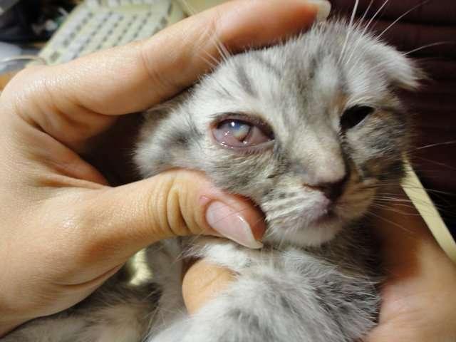 Кошка чихает: причины и лечение в домашних условиях