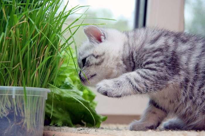 Что делать если у кота сера в ушах