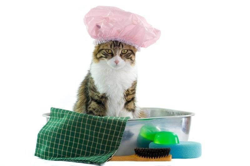 Как часто можно мыть кошку? сколько раз в месяц и в год нужно купать взрослого домашнего кота и котенка? с какой периодичностью необходимо купать длинношерстную кошку? почему кошек нельзя часто купать?