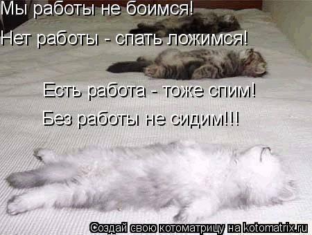 Кошка не дает спать ночью, что делать
