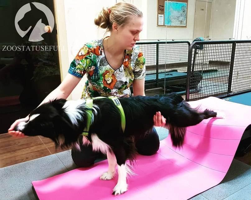 Профессия ветеринар: кто такой, чем занимается, что нужно, чтобы стать — описание, плюсы и минусы для женщин — profylady