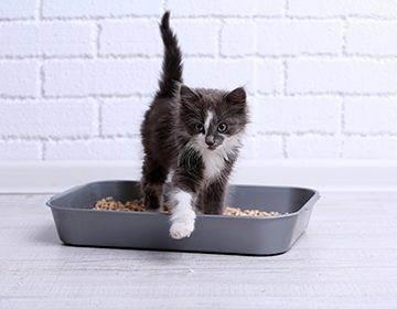 Кошка или кот гадит: как отучить кошку гадить в неположенном месте? | нвп «астрафарм»