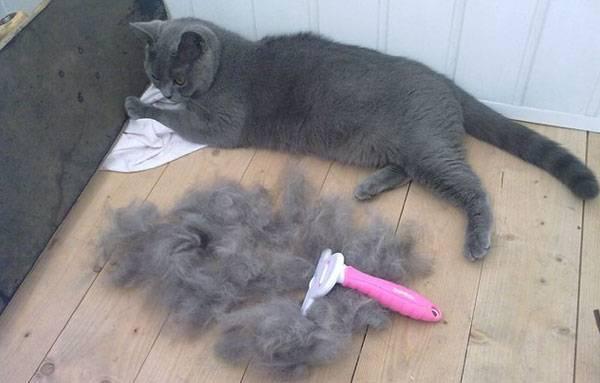 Причины линьки у кошки, сколько длится и как ее уменьшить