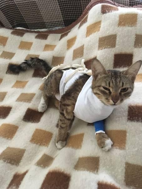 Что делать, если кошка после стерилизации не ест и не пьет