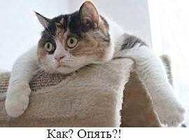 Гормоны для кошек: за и против