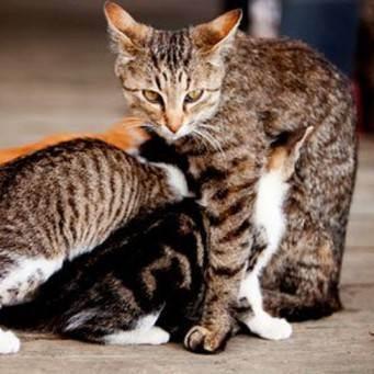 Кошка съела новорождённых котят - запись пользователя наталья (id2664687) в сообществе домашние животные в категории интересное о животных - babyblog.ru