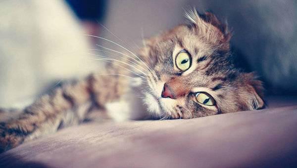 Лечение гепатолипидоза у кошек