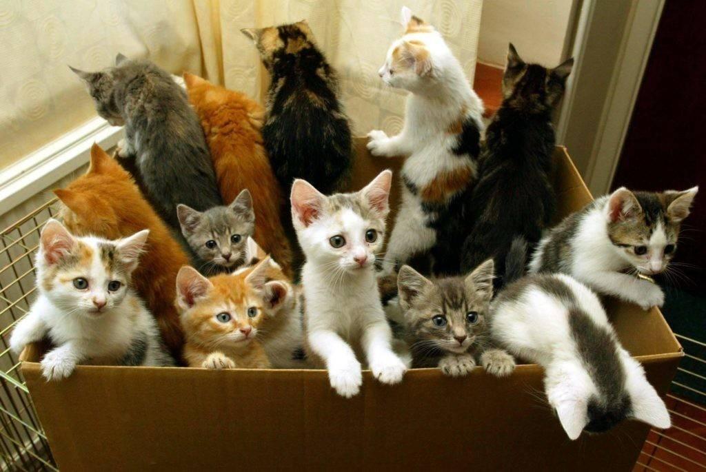 Сколько кошек в мире и в россии