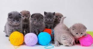 Как подстричь когти кошке в домашних условиях: инструменты, методы успокоить животное