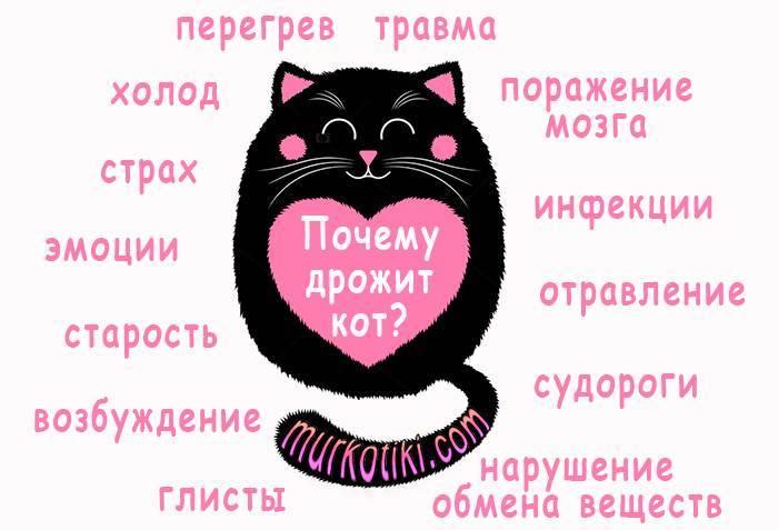 Кот дрожит когда лежит — причины и нужно ли беспокоиться | кот и кошка