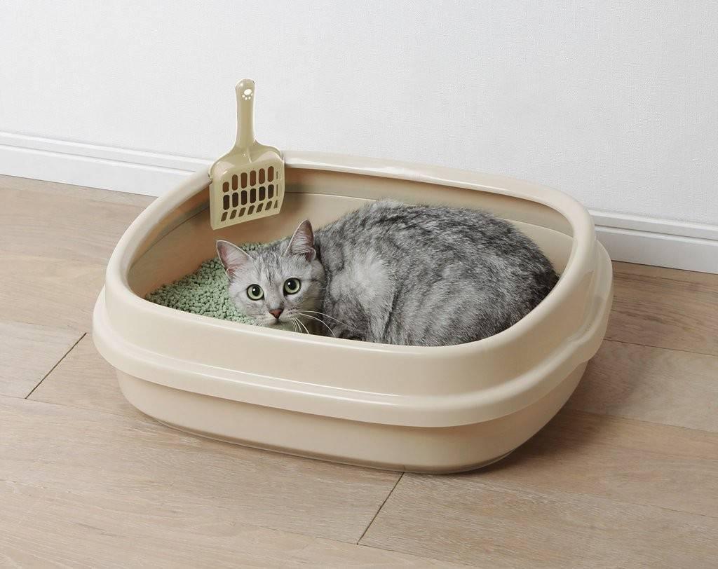 Кошачий туалет как лучше с наполнителем или без