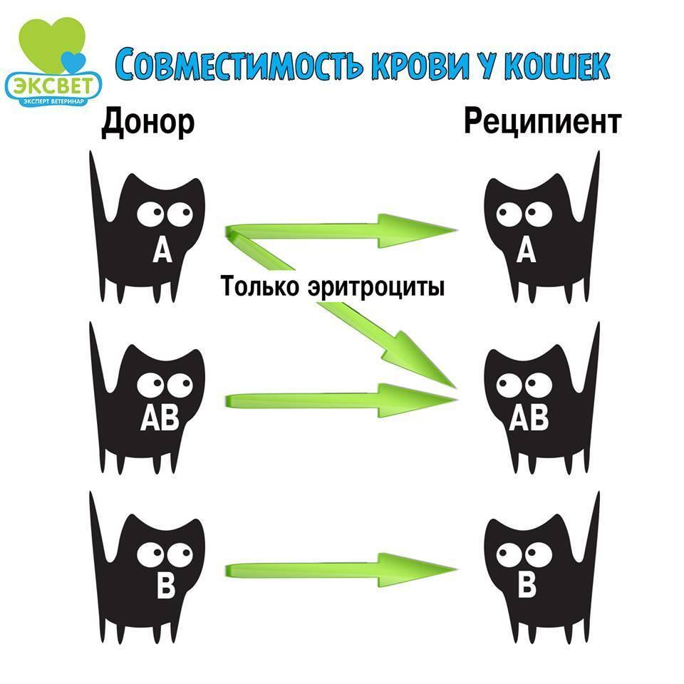 Показания к переливанию компонентов крови у собак и кошек