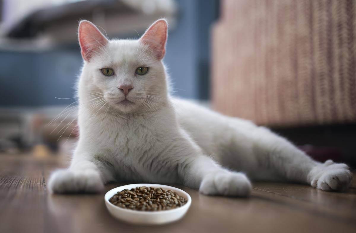 Рейтинг кошачьих кормов по мнению ветеринаров: выбираем лучший