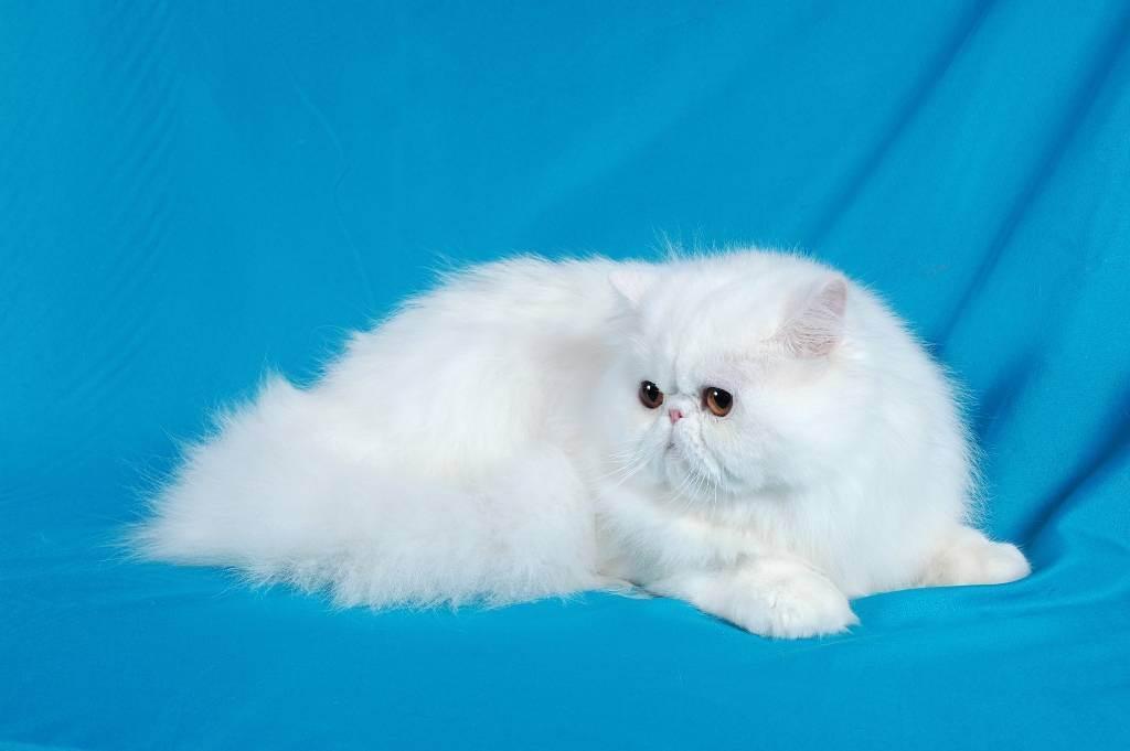 Вреден ли кошкам влажный корм. сухой корм для кошек и котов: вред или польза? кошкам необходимо потреблять достаточное количество влаги вместе с пищей
