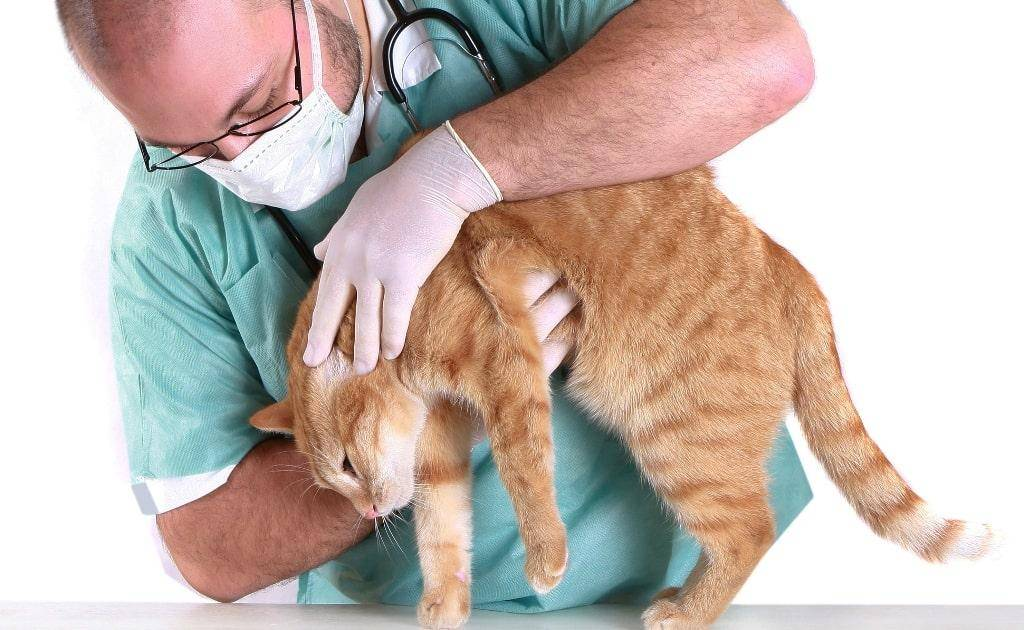 Болезни котят: как понять и чем может заболеть ваш любимец