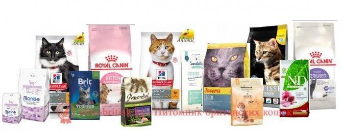 Какие корма для кошек рекомендуют ветеринары: эконом, премиум, холистик классов