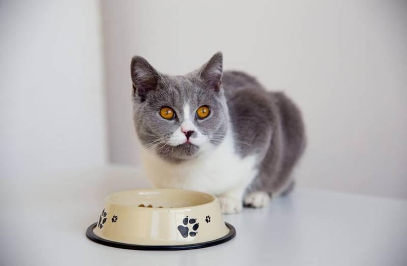 Почему у кошек возникает запор и как его лечить?