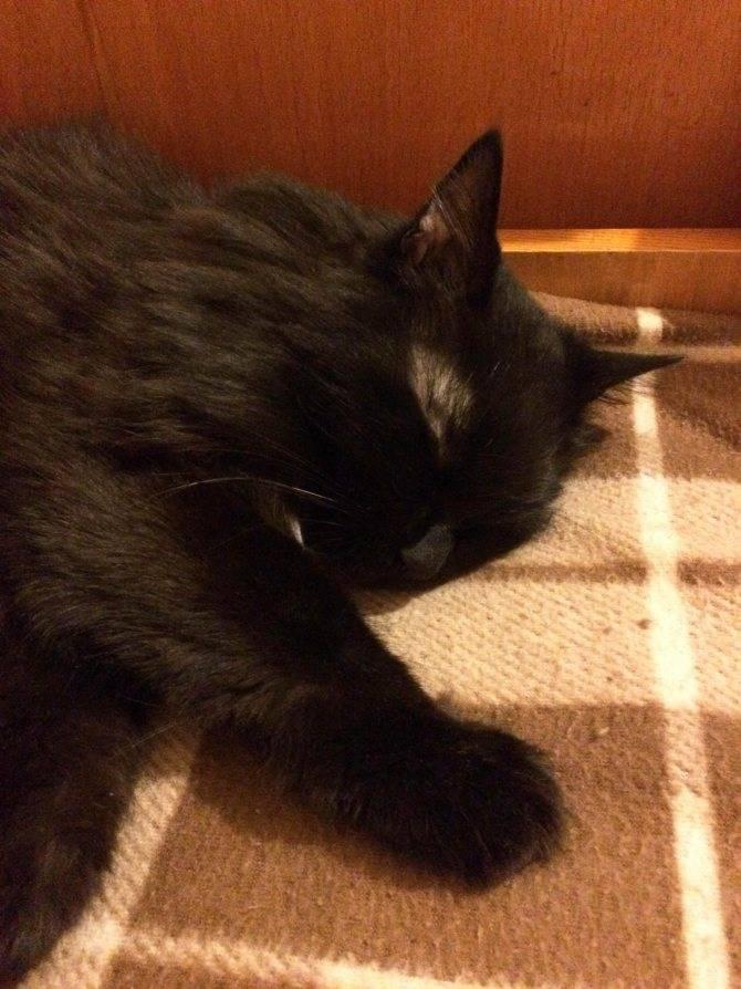 Похороны кошки: как это сделать правильно самому и где в городе разрешено