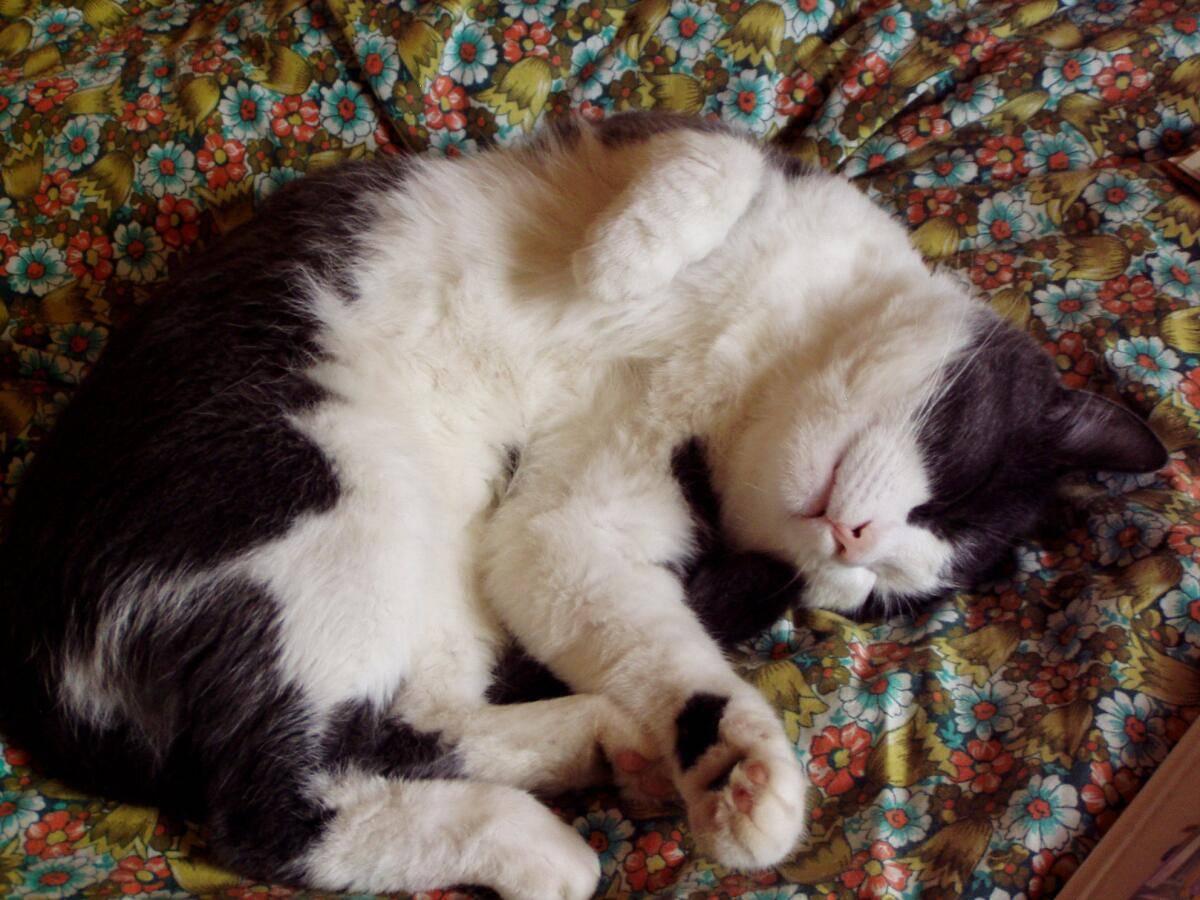Сонник кошке плохо. к чему снится кошке плохо видеть во сне - сонник дома солнца