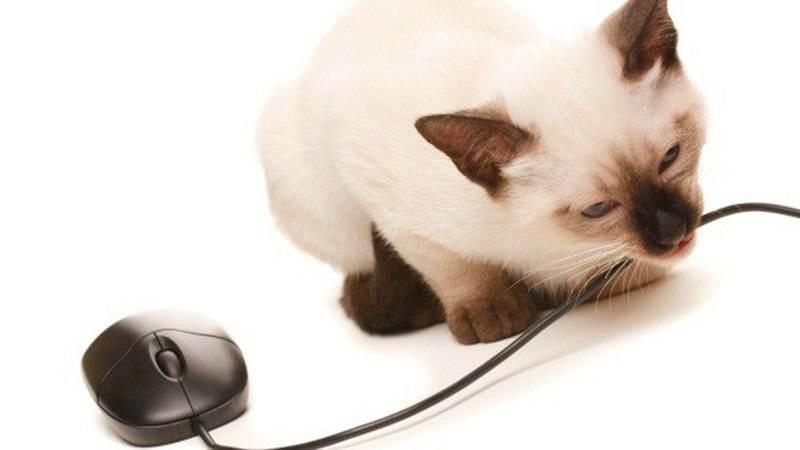 Примеры как отучить кота если он грызет провод: основные причины и что делать