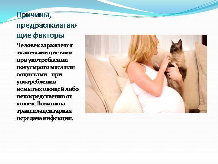 Какими болезнями человек может заражаться от кошки: признаки заболеваний