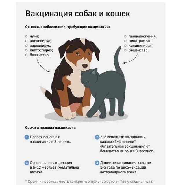 Прививка от чумки кошкам – сколько стоит вакцинация?
