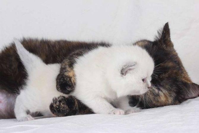 Как подготовить место для родов кошки?