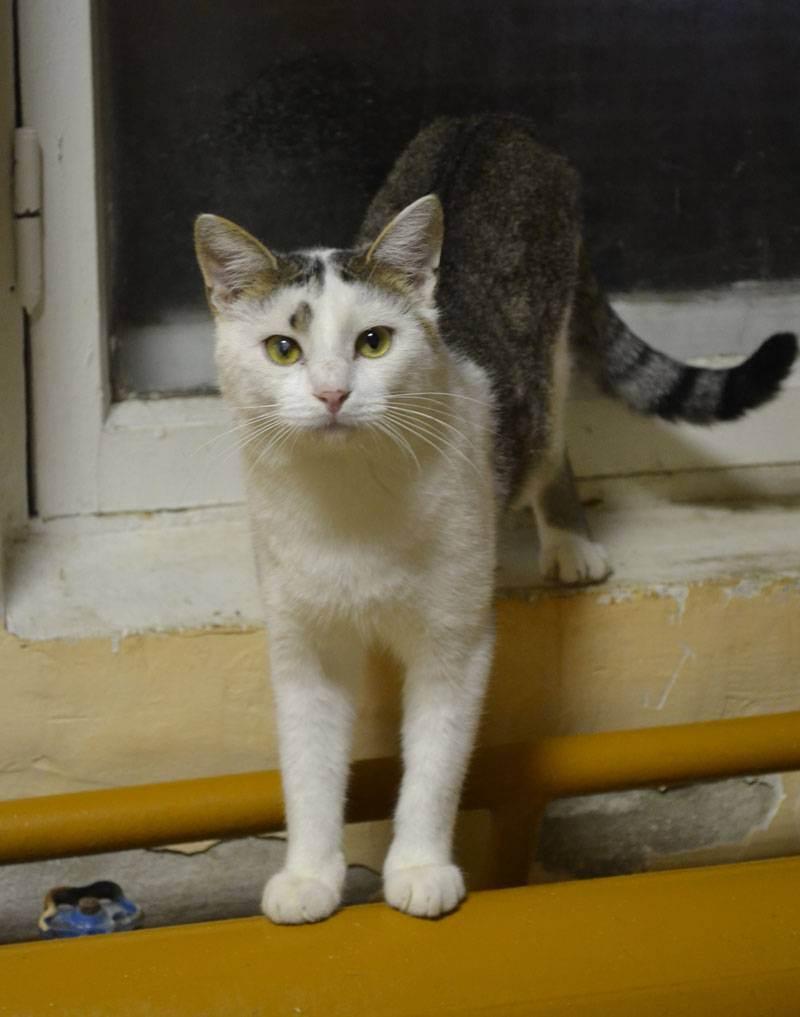 Какая миска лучше для кошки – тип, материал, форма, размер