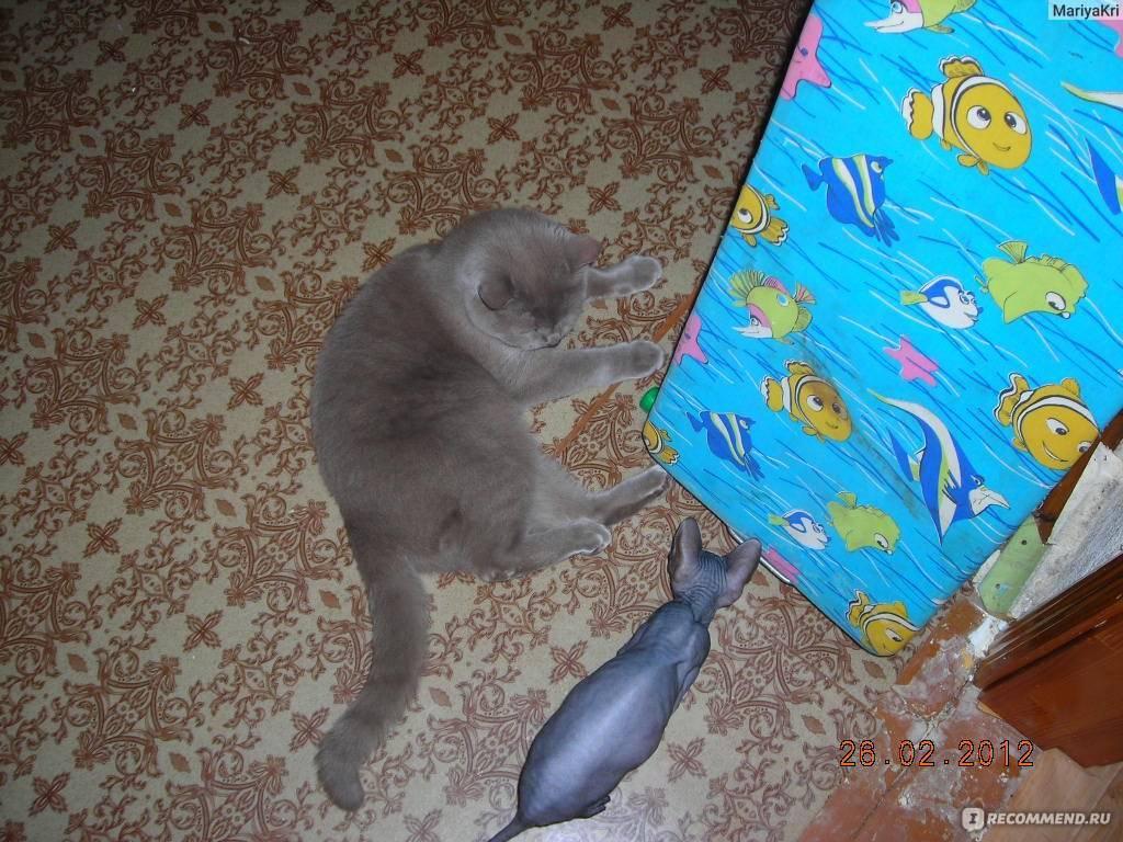 Кот или кошка — выбираем вместе